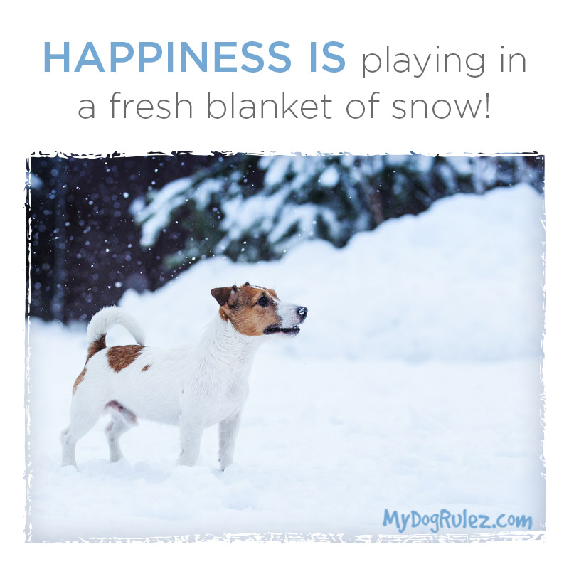 Dog Happy Snow