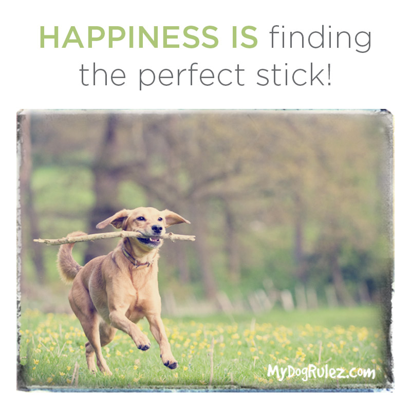 Dog Perfect Stick
