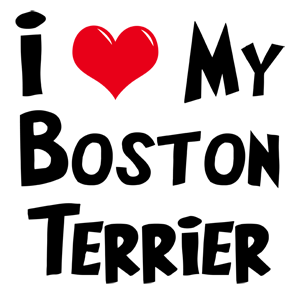 LE TERRIER DE BOSTON - Page 10 I-Love-My-Boston-Terrier
